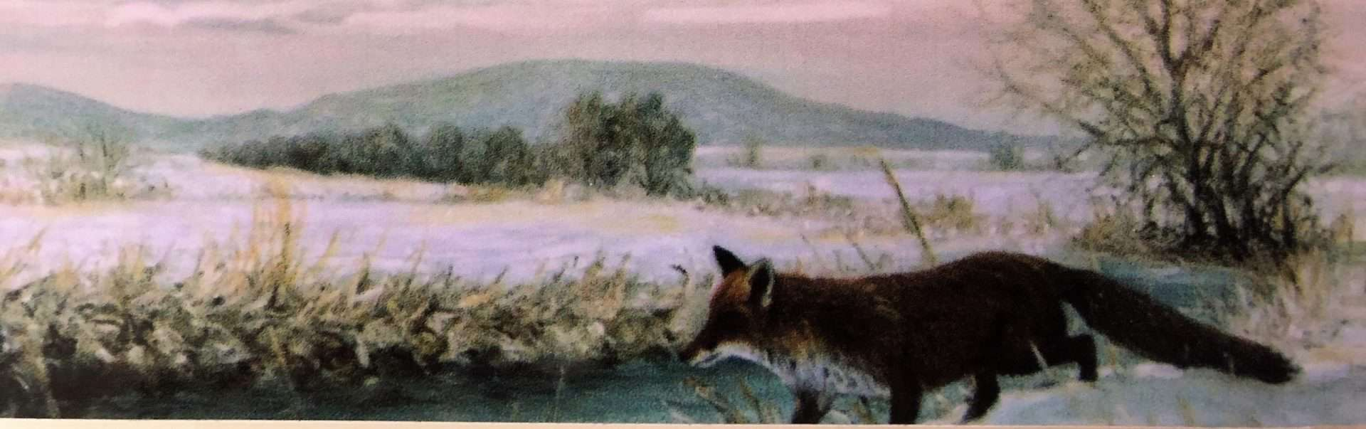 Foxberg3